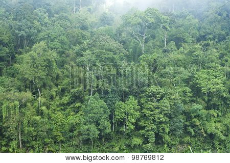 Green Forest Background