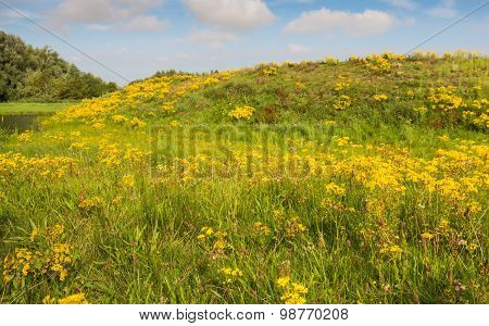 Blooming And Overblown Wild Plants In Summertime