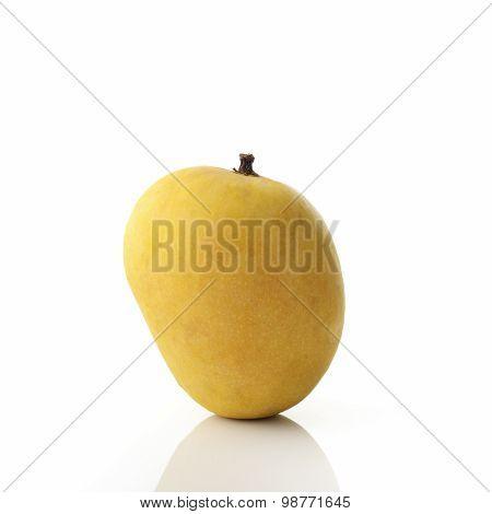 Golden Yellow Alphonso Mango on White Background shot in studio