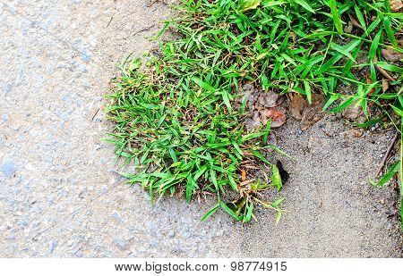 Grass Grow On Stone Ground Texture