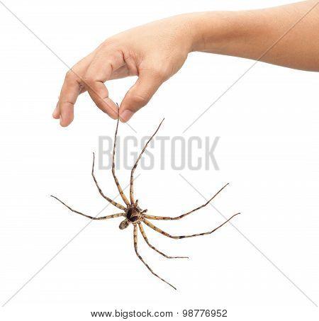 Adult Man Hand Holding Spider