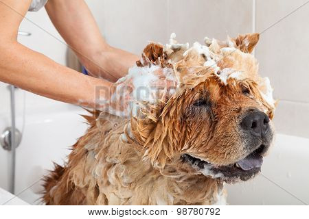 Bathroom To A Dog Chow Chow