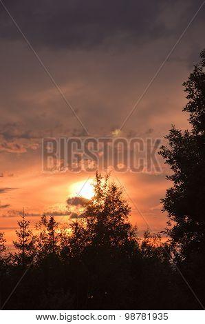 Sunset treetops