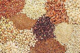 stock photo of millet  - gluten free grains  - JPG