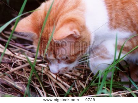 Orange Cat Hunting