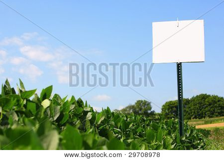 Soybean field with sign