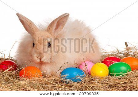 Liebenswert Hasen und Ostereier auf weißem Hintergrund