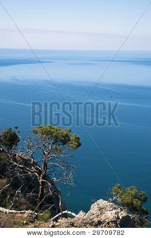 A Tree Near The Sea