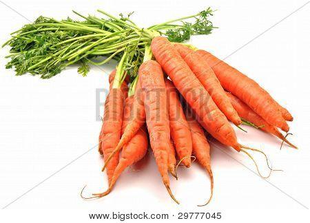 Bando de cenouras