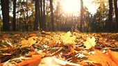 Beautiful Yellow Leaves In An Autumn Park. Autumn Leaves Covering The Ground In The Autumn Forest. G poster