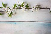 Spring Flower Landscape. Spring Blooming Spring Flowers On Wooden Background. Blue Flowers In Spring poster