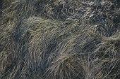 Steppe Grass. Grunge Grass. Grass Background. Grass Texture. poster