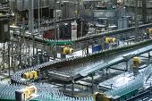 Beer Bottles Moving On Automated Conveyor Line Or Belt. Industrial Brewery And Alcohol Production Eq poster