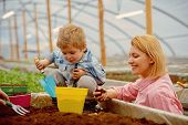 Mother And Child In Greenhouse. Mother And Child Working In Modern Greenhouse Garden. Mother And Son poster