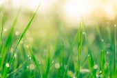 Blurred Fresh Green Grass Field In The Early Morning With Morning Dew. Water Drop On Tip Of Grass Le poster