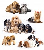 stock photo of puppies mother dog  - Group of cats and dogs in front of white background - JPG