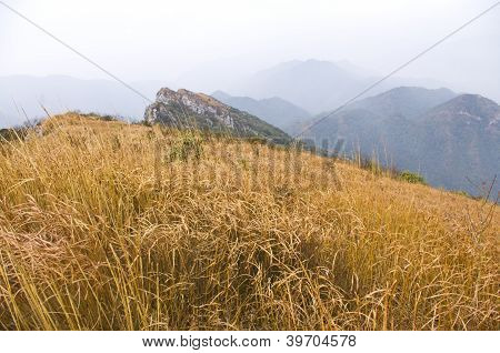 mountaintop with yellow grass