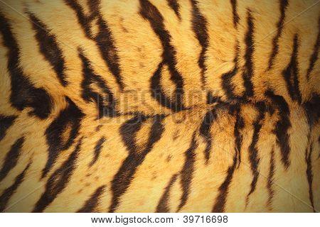 Pele de tigre