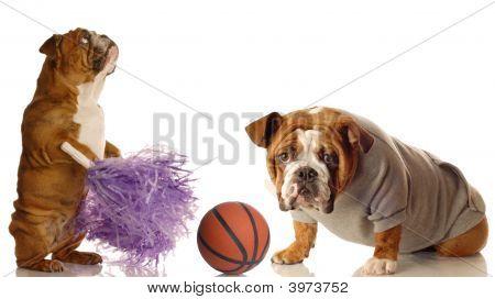 Sports Bulldogs