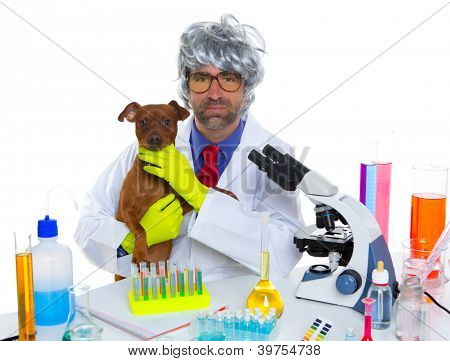 Crazy nerd scientist silly veterinary man with dog in chemical laboratory