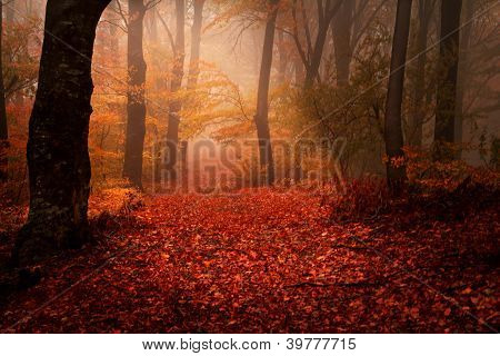 Beautiful forest during autumn
