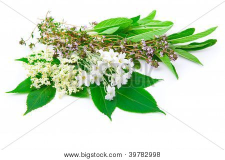 Bunch Of Herbs : Sage, Thyme, Elderflower, Sambucus