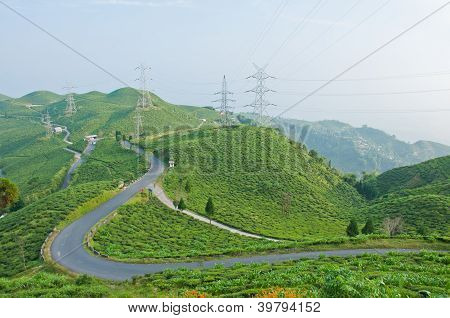 Road Along Tea Plantation On The Mountain In Darjeeling, India