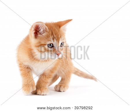 Cute kitten playing on white