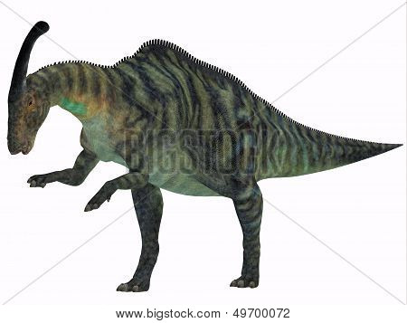 Parasaurolophus Dinosaur On White