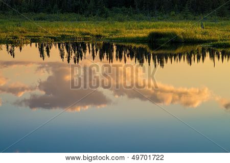 Cloud And Pine Reflections, Sunset