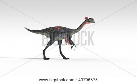 gigantoraptor isolated on white