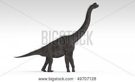 brachiosaurus isolated