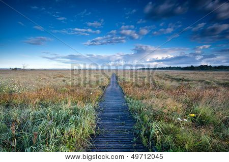 Wooden Path Through Swamps