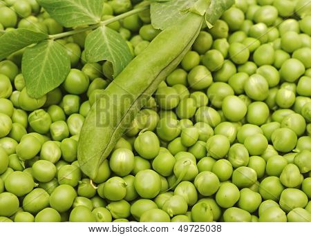 Green peas and green pea pods as a background