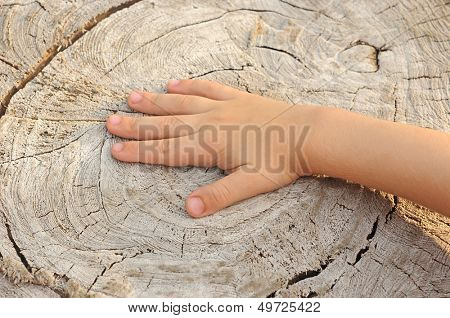 Children's hand is located on an old stump