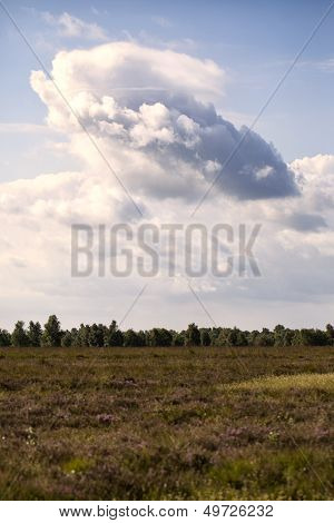 Bog - Cloud