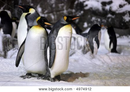 Emperor Penguins Hanging Out Together