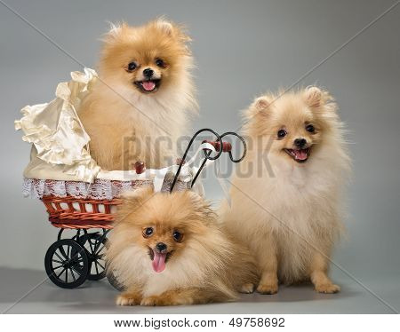 Three puppies with a sidecar