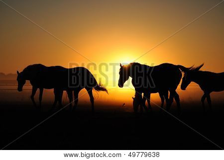 A herd of horses at sunrise.