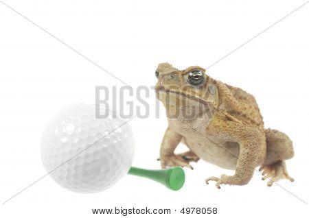 Golfing Frog