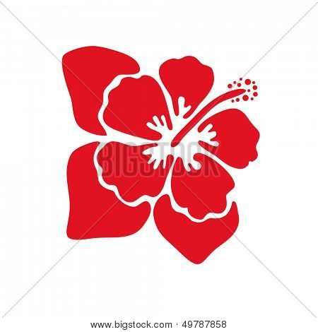 Hibiscus flower with leaves. Vector illustration.