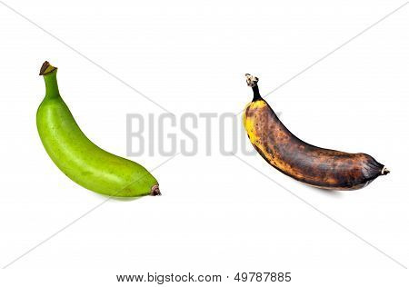 Plantain Green and Ripe