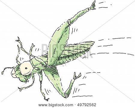 Crazy Legs Grasshopper