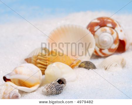 Line Of Sea Shells