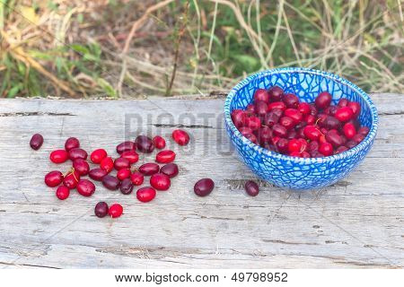 Blue Plate With Cornelian Cherries