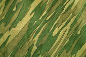 pic of camo  - Closeup of camouflage pattern - JPG