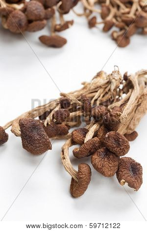 brown tea tree mushrooms.Popularly used in chinese