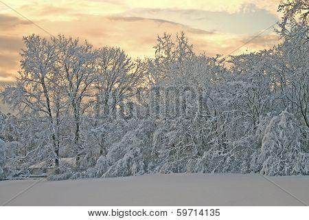 Winter Morning Glow