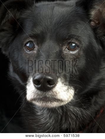 Intense Old Dog