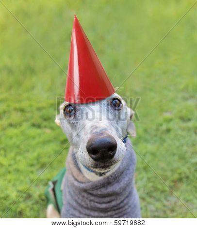 a cute dog in a local park with a birthday hat on